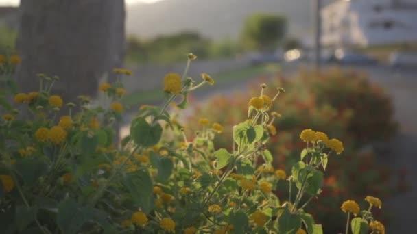 Rostliny se žlutými květy zůstat stále