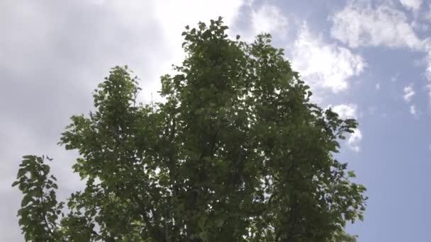 Zelený strom na modrou oblohou