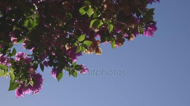 tropických růžové květy