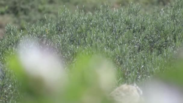 Nahaufnahme von Blumen auf dem Feld