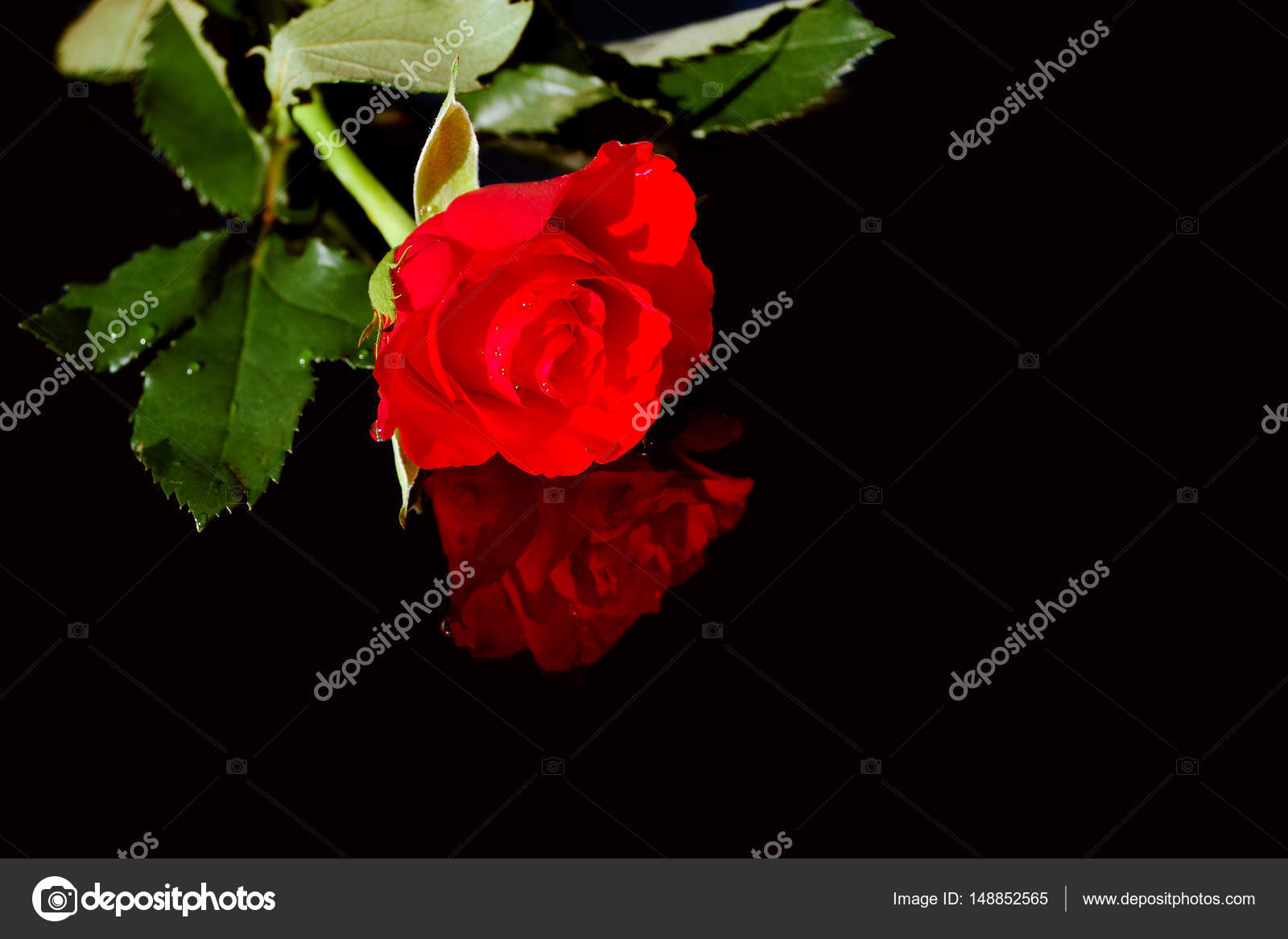 Scarlet Rose Nude Photos 100