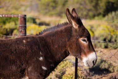portrair of a donkey on a farm