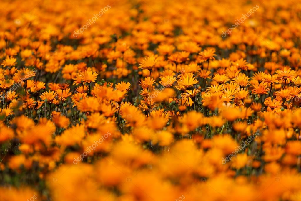 Close up image of a patch of wild flowers