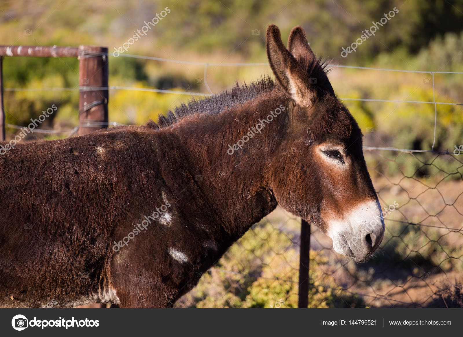 Áˆ Donkey And Cart Stock Pics Royalty Free Donkey Cart Pictures Download On Depositphotos