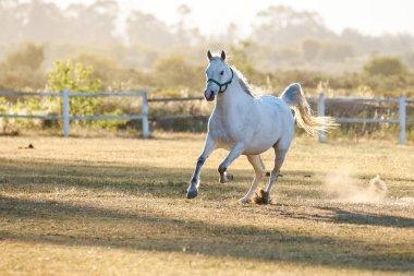 Beautiful horse playing