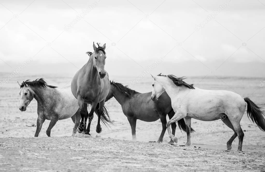 horses nature landscape.