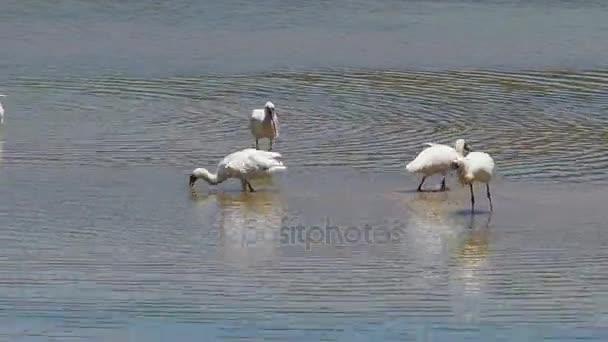 gémek madarak a vízben