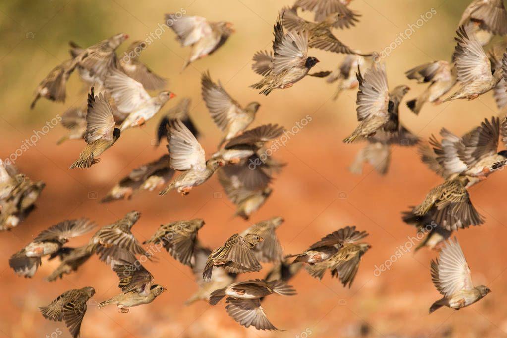 weaver birds flying around