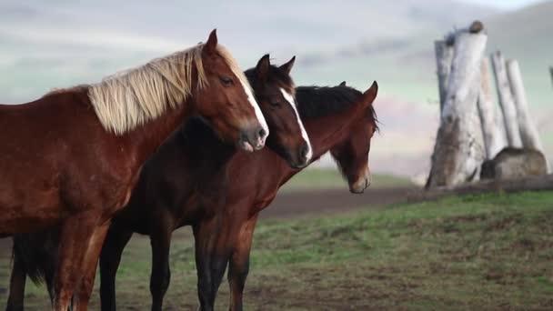 Široký záběr koní chůzi