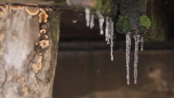 Icicle close up rack focus