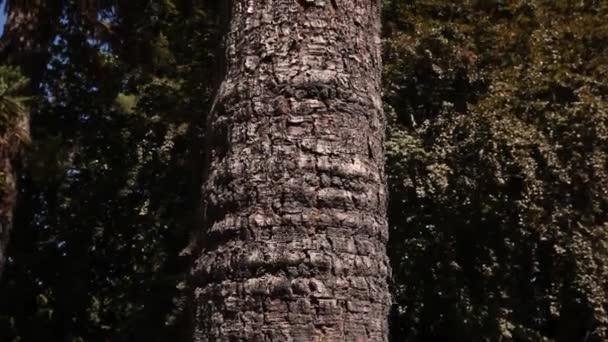 A nagy fa törzse