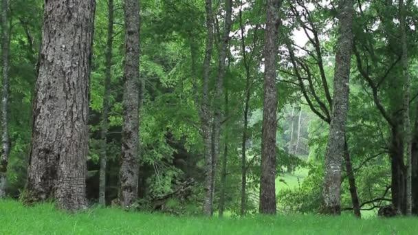 Široký záběr na stromy v lese