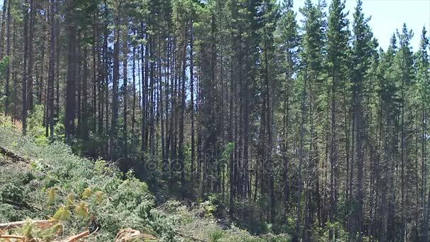 stromy v zeleném lese