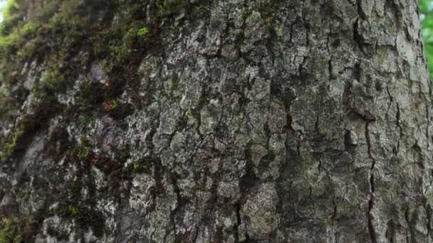 Kmen stromu velké