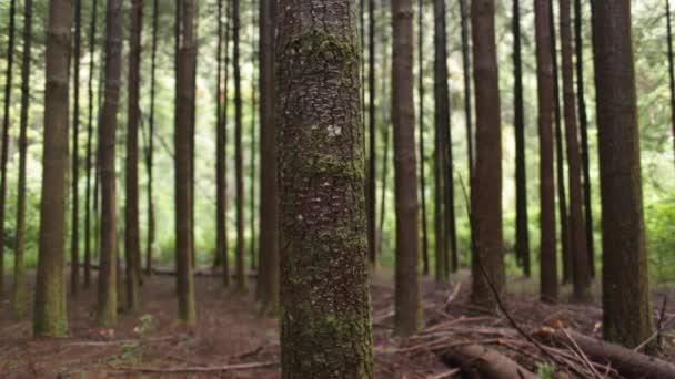 Lesní stromová kůra