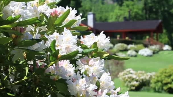 Tájház és virágok
