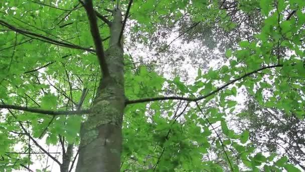 Široký záběr zpod stromu