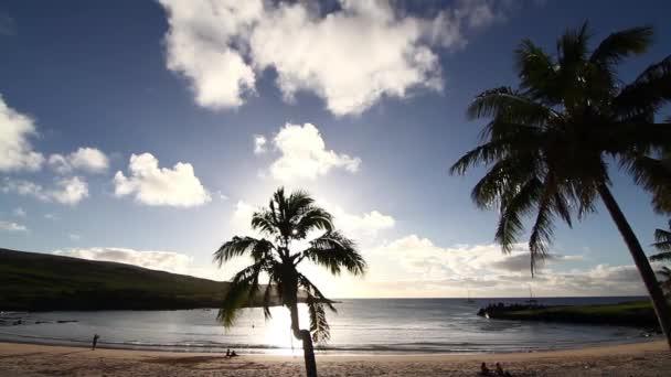Západ slunce skrze palmy na pláži