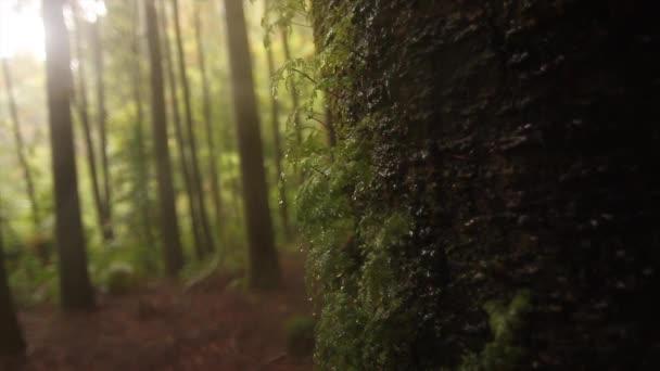 Větve stromů deštného pralesa