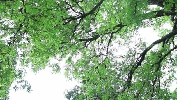 Svěží zelené stromy
