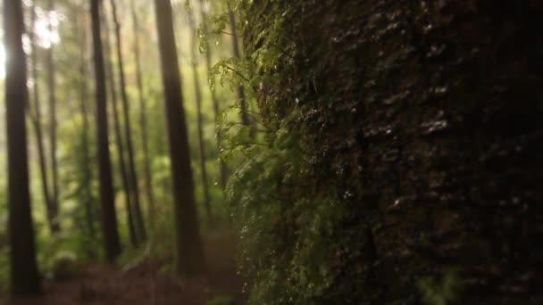 Rainforest tree branches
