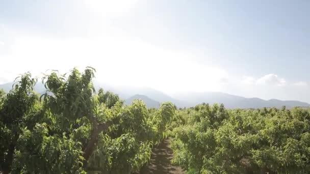 Green grove trees in field