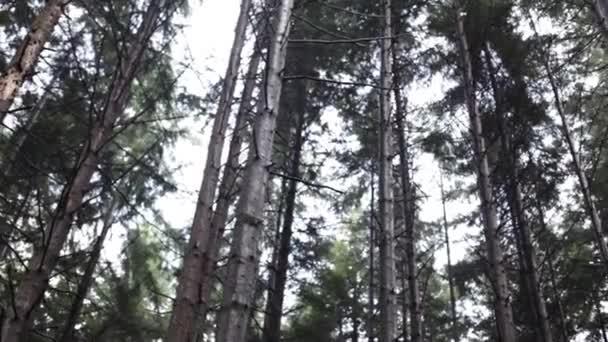 vysoké stromy v lese