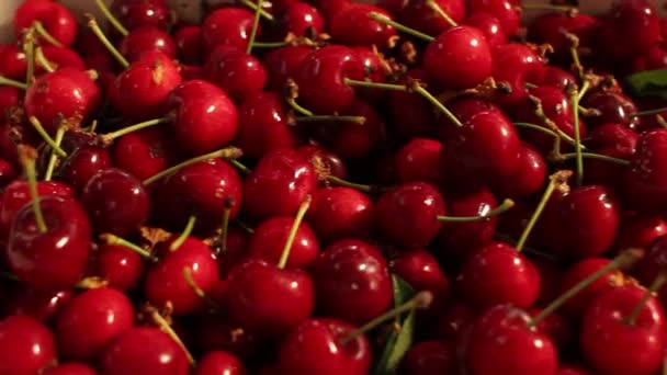 Close up of fresh cherries