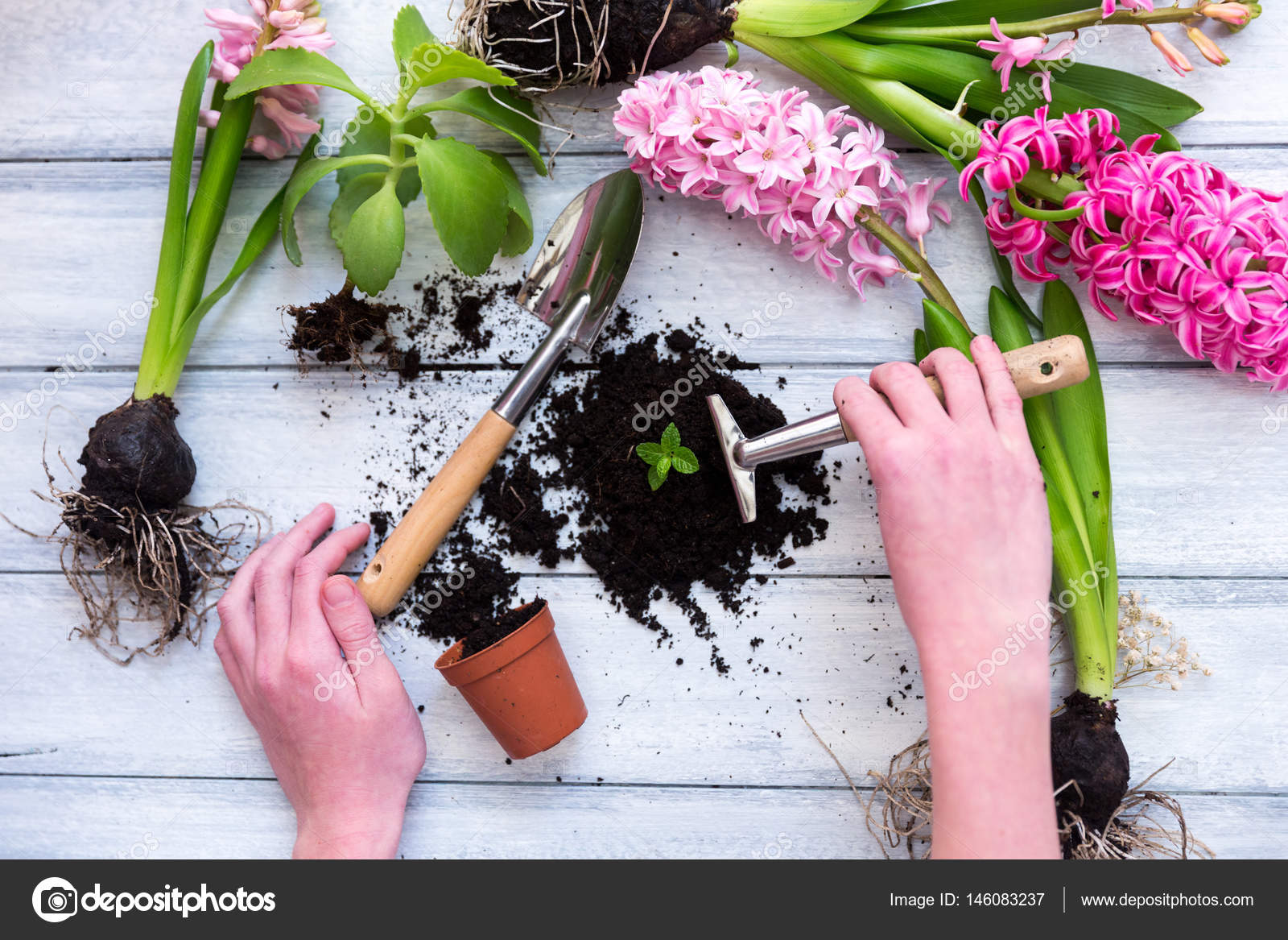 Workspace planting spring flowers garden tools hyacinth and workspace planting spring flowers garden tools hyacinth and plants in pots on a mightylinksfo Image collections