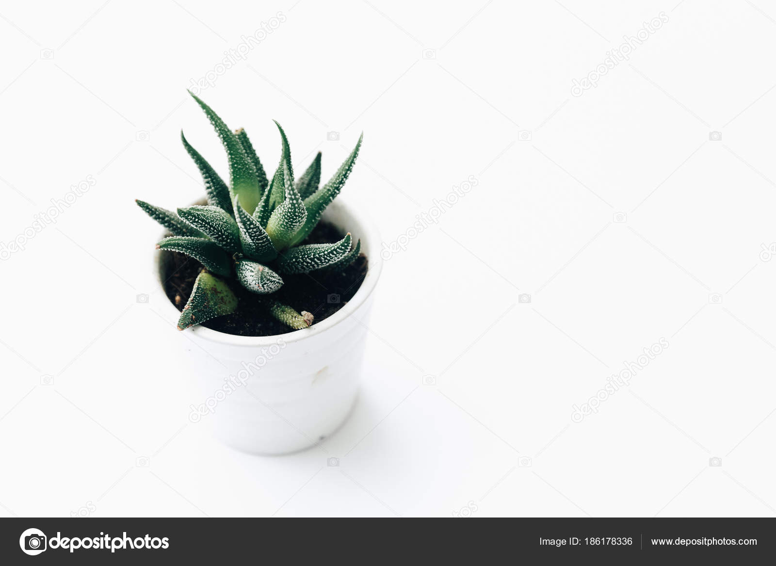 Pictures House Plant Arrangement House Plants Potted Succulents Clean White Background Stock Photo C Victoriabee 186178336