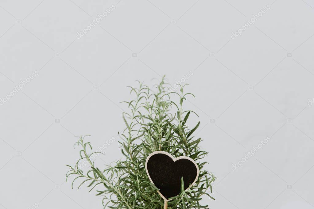 Fresh herb rosemary. Minimal herb concept