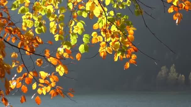 Podzimní žlutá strom větev, horské jezero v pozadí, příroda krajina