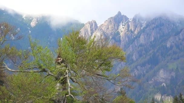 Jeden starý strom a vysoké hory, nádherná příroda