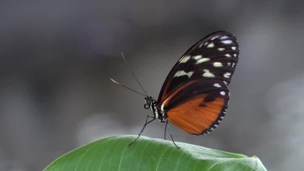 Krásný motýl odpočinku na zelený list, rozostření pozadí