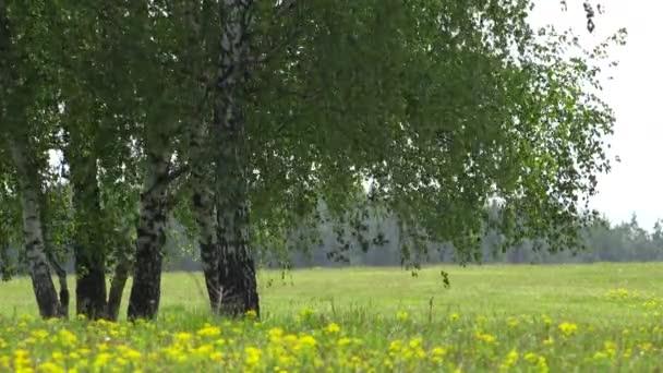 Izolované zelené stromy a květu pole s květinou, krásný Jarní krajina