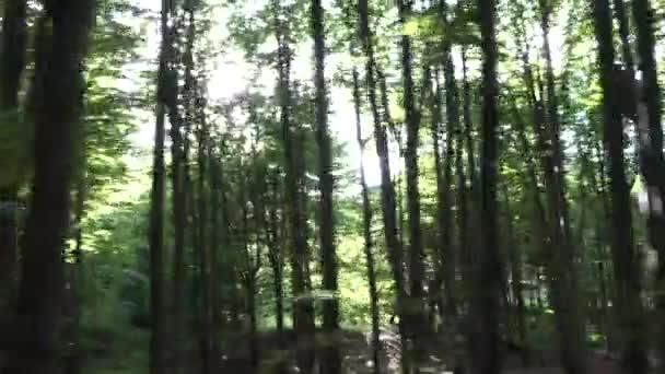 Forest pohled z vozem, slunce svítilo myšlení stromy větve