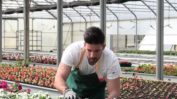 šťastný muž školky pracovník oříznutí rostliny ve skleníku