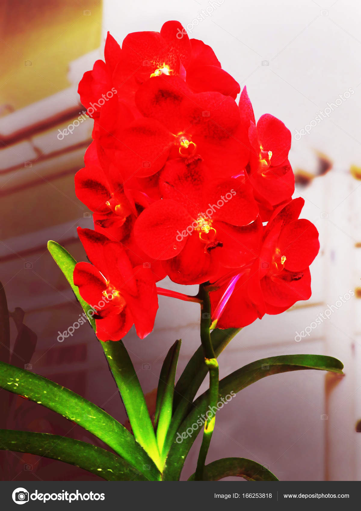 orquideas flor de la orquídea orquídea sobre fondo natural flor