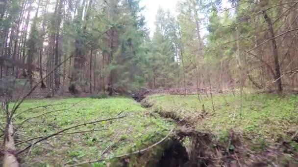 Jarní les s větrolam