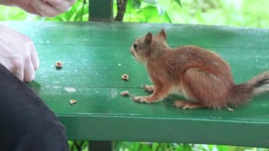Feeding squirrels with hands