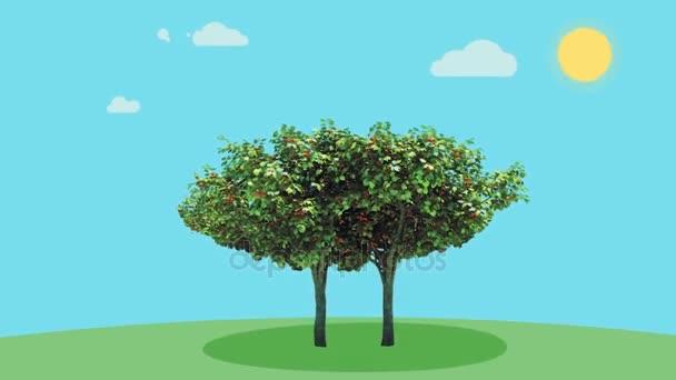 ağacın içinde saklı kuş resmi animasyon ile ilgili görsel sonucu