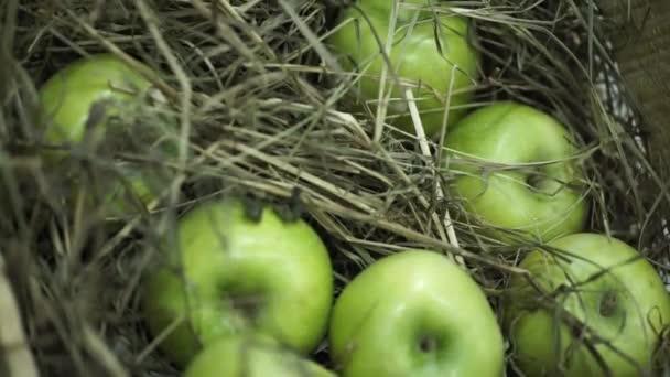 Zelená jablka v seně. Košík s jablky, ležící v seně. Šťavnatá zralá jablka a hrušky položit hrudník sklizeň. Na prsou stojí na krásný zelený trávník. Složení z jablek a seno