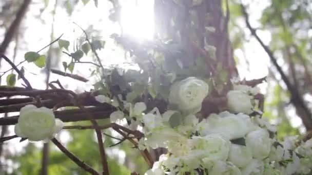 Szép fehér bokor Rózsa. Díszítő fehér virágok, a fényes nap. Pályázati rózsák kertjében. Gyönyörű rózsák, zöld levelek és tövis. Két bimbók, virágok, egy fehér kutya-rose közelről. Szép bokeh