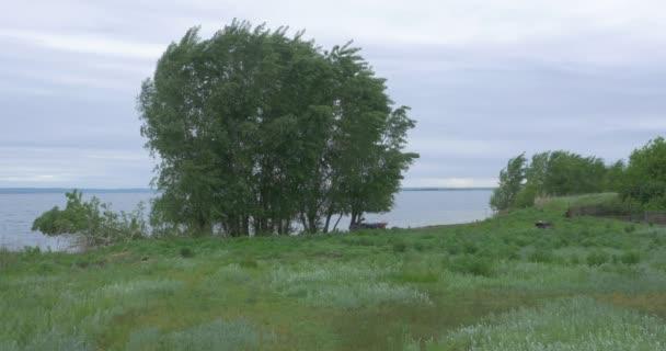 Strom, poblíž jezera při západu slunce. Krásné přírodní krajiny. strom přírodní krajinu a jezero pozadí
