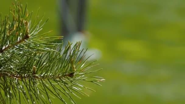 Golfisté zasáhnout rozsáhlé golfové hřiště v létě. Hra golfu