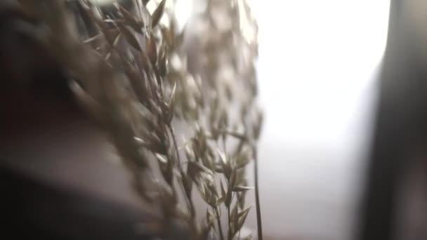 Zavřete Prairie květiny ve váze, rozostření
