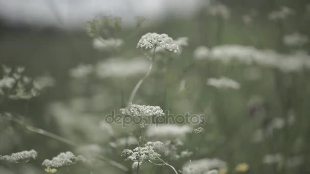 Zblízka divoká květina v oboru. Divoké květiny rostoucí na zelené louce