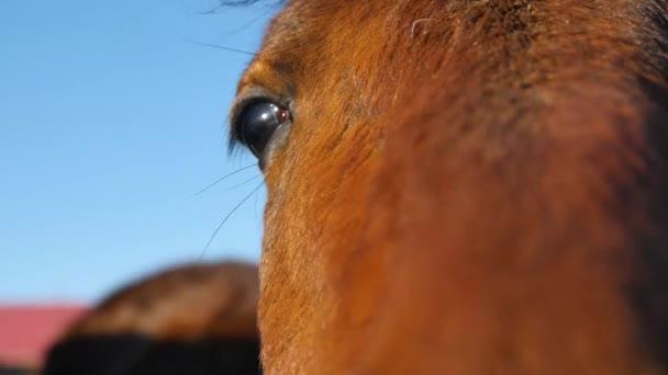 Detailní záběr oka koně