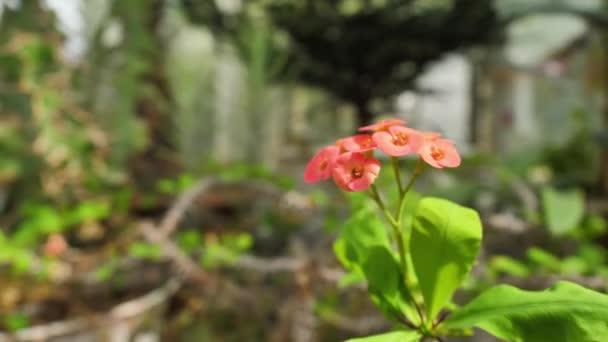 Divoce rostoucí květiny a rostliny. Divoké květiny. Barevné květiny na hřišti. Květy mezi trávu a divoce rostoucích květin zblízka