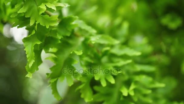 Zöld bokor közelről. Absztrakt természet háttér. Zöld levelek